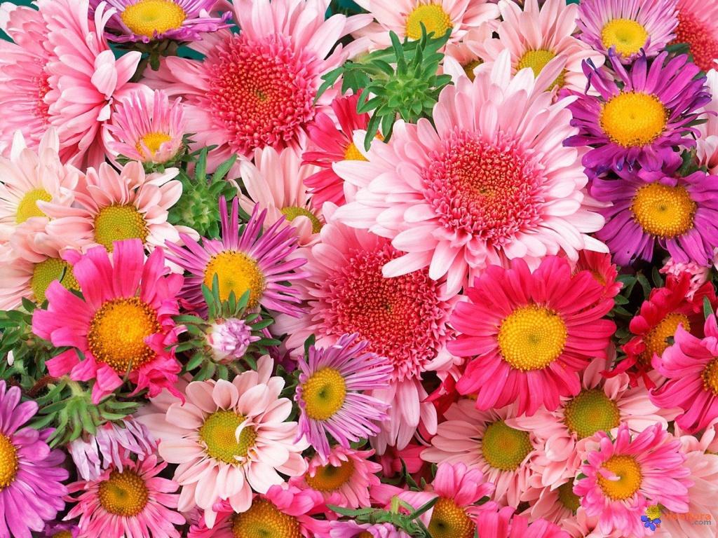 Bouquet de fleurs visoflora 42269